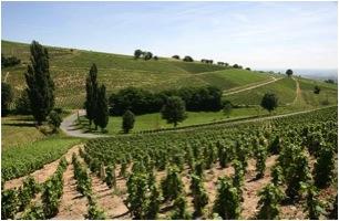 Beyond Nouveau:  The Cru Beaujolais