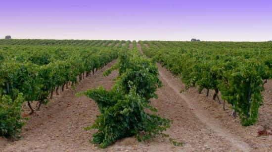 Spain's Unheralded White Wine