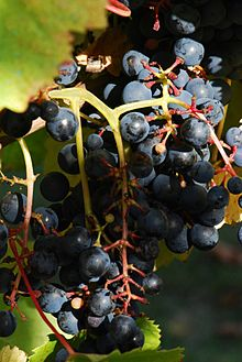Uruguay & Wine